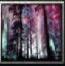 Nameless forest