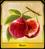 Fruit Of Longevity