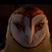Datadoggieein's avatar