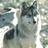 Morgan-wolf's avatar