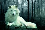 Wolf of Walker