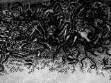 Hell (Siege)