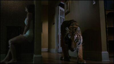 Lucifer(tiger)(Burning Bright 2010)