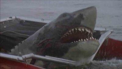 Jaws-2-shark