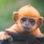 MonkeyPoomonkeyPee