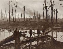 Chateau wood at Passchendaele Third Ypres Australian War Memorial E01220