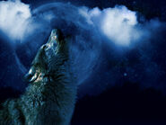 Wolf howling at the moon by amerianna