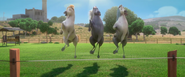Horses hooves clap dance