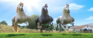 Horse dance 1