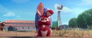 Bunnyforward