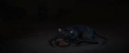 Young Ferdinand unconscious