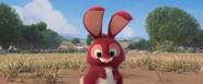 Bunnyoutsidehole (1)