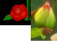 Ferngully the Last Rainforest and Epic Logo