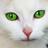 SkAlex's avatar