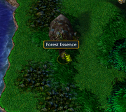 Forest Essence