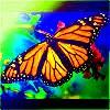 ButterfliesShortEdit