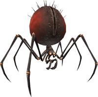 Vermilion and Onyx Spider