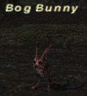 Bogbunny