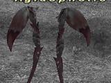 Aglaophotis
