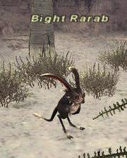 Bight Rarab