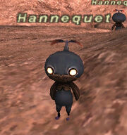 Hannequet