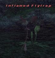 Inflamed flytrap