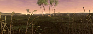 Pashhow-marshlands-pic