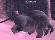Bluffalo