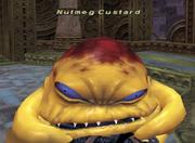 Nutmeg Custard