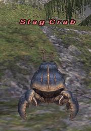 Stag Crab