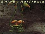 Snippy Rafflesia