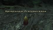 Spinescent Protuberance