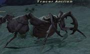 Tracerantlion