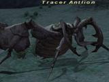 Tracer Antlion