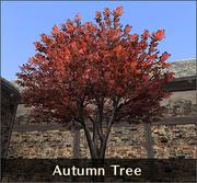 Autumn Tree 500px