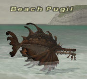 Beachpugil