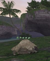 Rearing-sheep