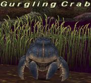 Gurgling Crab