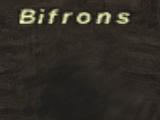 Bifrons