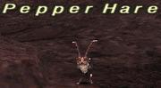 Pepper Hare