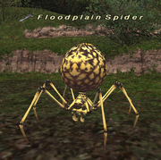 Floodplain Spider