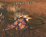 Canyon Eft