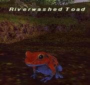 Riverwashed Toad