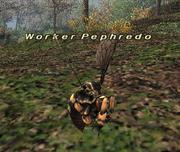 Worker Pephredo
