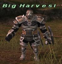 Big Harvest (A)