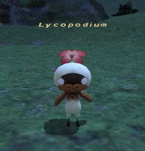 Lycopodium2
