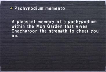 Pachypodium memento