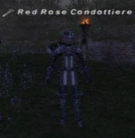Red Rose Condottiere