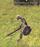 Ancient Royal Knight