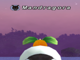 New Year Mandragora (MON)